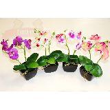 Орхидея 5 в черном прямоуг. керам. горшке 23*15см